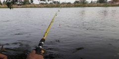 هل يحرم على المحرم صيد السمك