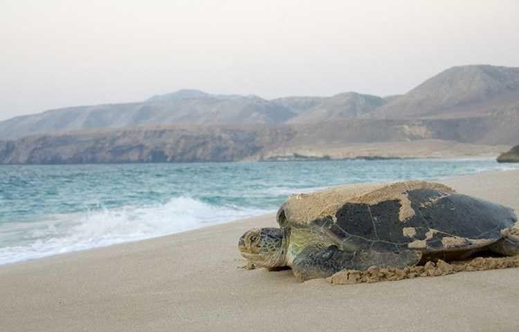 السياحة في ولاية صور سلطنة عمان .. الأماكن السياحية فى ولاية صور ..