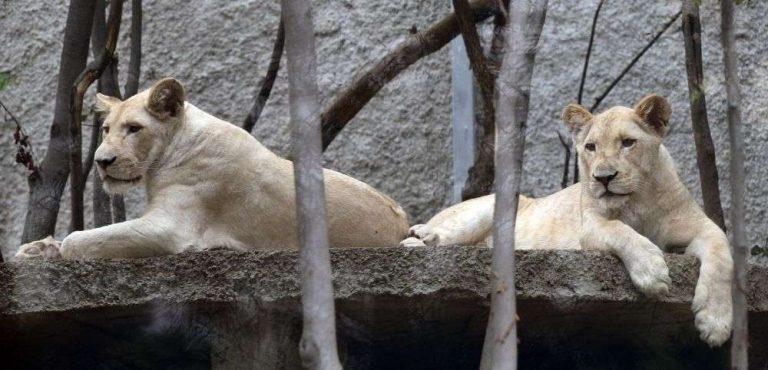 حديقة الحيوان في تبليسي… انواع الحيوانات واشهر الأنشطة الترفيهية بها –