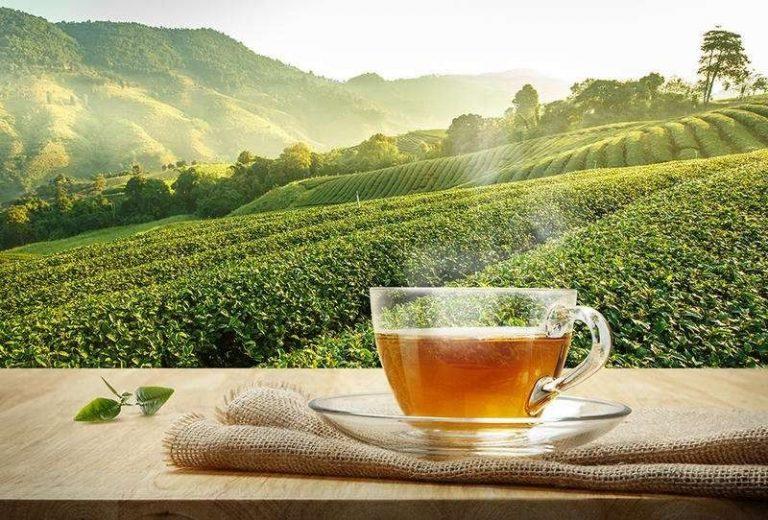 هل تعلم عن الشاي .. حقائق و معلومات تهمك عن جميع أنواع الشاي   بحر المعرفة