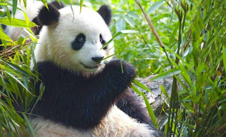 حديقة الحيوان في مدريد … معلومات عن موطن الباندا العملاقة وأقدم الحدائق في العالم