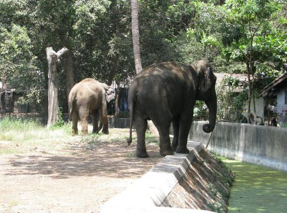 حديقة الحيوان في مومباي … معلومات عن أفضل حديقة الحيوان في مومباي