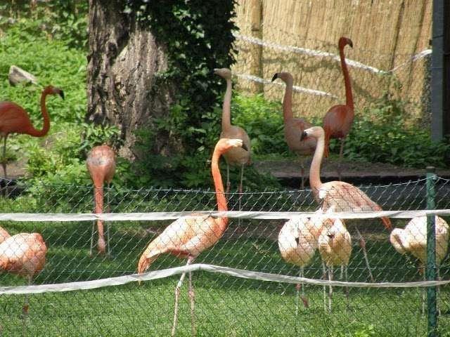 حديقة الحيوان في كارلسروه المانيا … معلومات عن حديقة الحيوان في كارلسروه