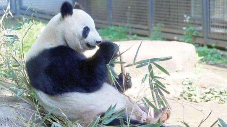 حديقة الحيوان في طوكيو … تعرف على اقسامها ومواعيدها واهم الانشطة بها