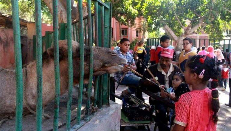 حديقة حيوان الإسكندرية … تعرف على واحدة من أقدم الحدائق في مصر
