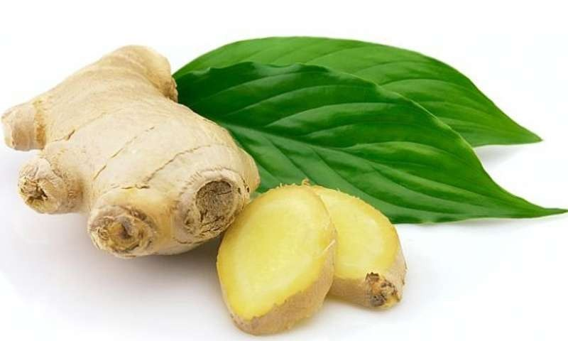 معلومات عن نبات الزنجبيل … تعرف علي نبات الزنجبيل وفوائد صحية كبيرة
