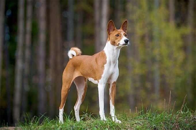 تربية الكلاب البلدي