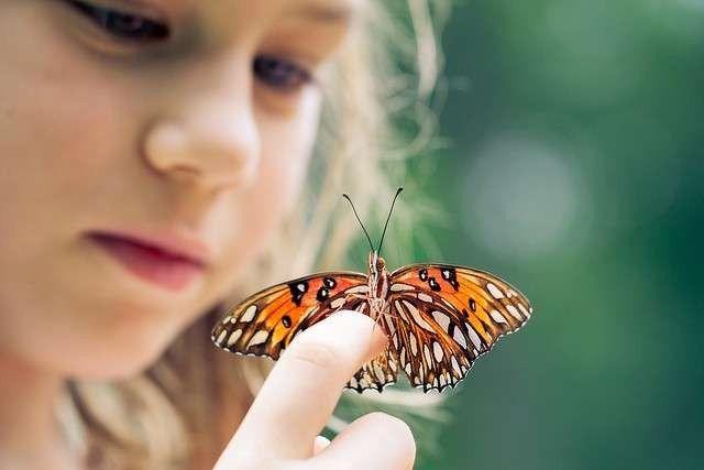 معلومات للاطفال عن الفراشة..حقائق و معلومات شيقة عن الفراشة لطفلك –