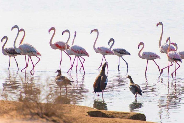 الطبيعة في الإمارات