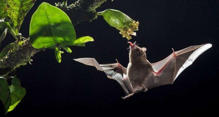 معلومات عن الخفاش… معلومات عديدة مذهلة عن طبيعة الخفافيش