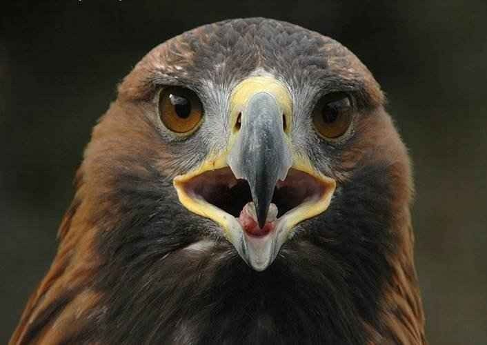 معلومات عن طائر العقاب .. مُلهم الأدباء