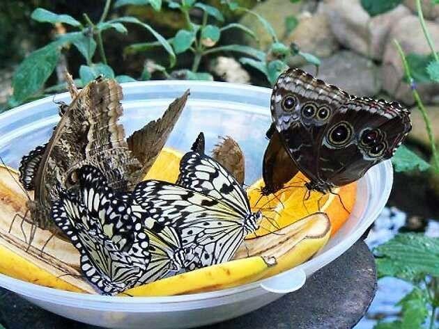 الطبيعة في غوا