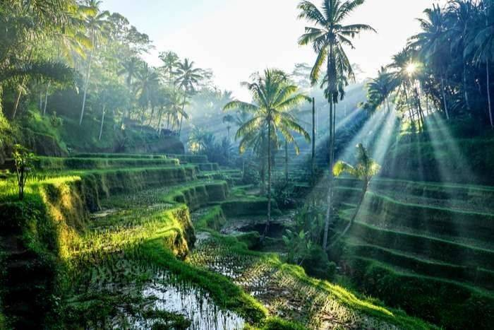 الطقس في إندونيسيا شهر يناير