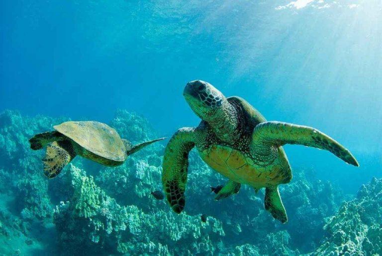 حقائق عن السلاحف – إستمتع بمعرفة الكثير من الحقائق عن السلاحف