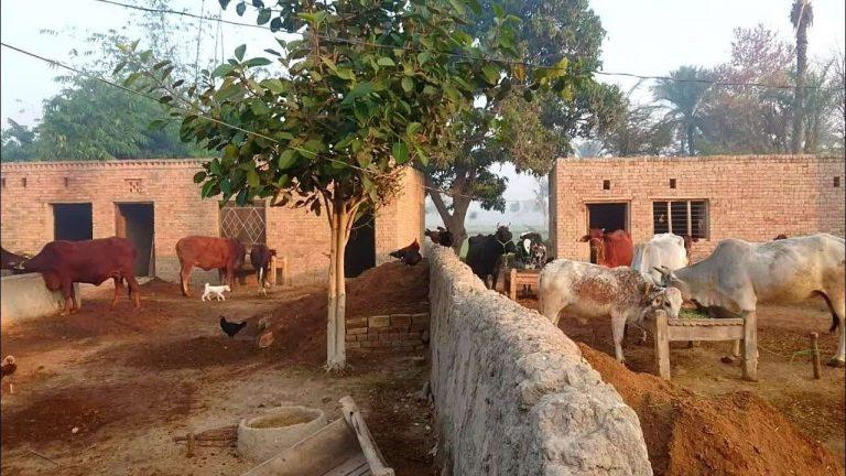 الحياة الريفية في باكستان..أبرز مظاهر الحياة الريفية في باكستان –