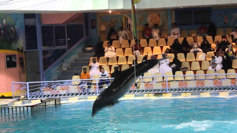 قرية الدولفين الترفيهية بالدمام Dolphin Village Dammam