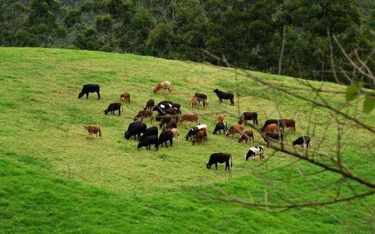 المزرعة الهندية السويسرية لمنتجات الألبان Indo Swiss Dairy Farm