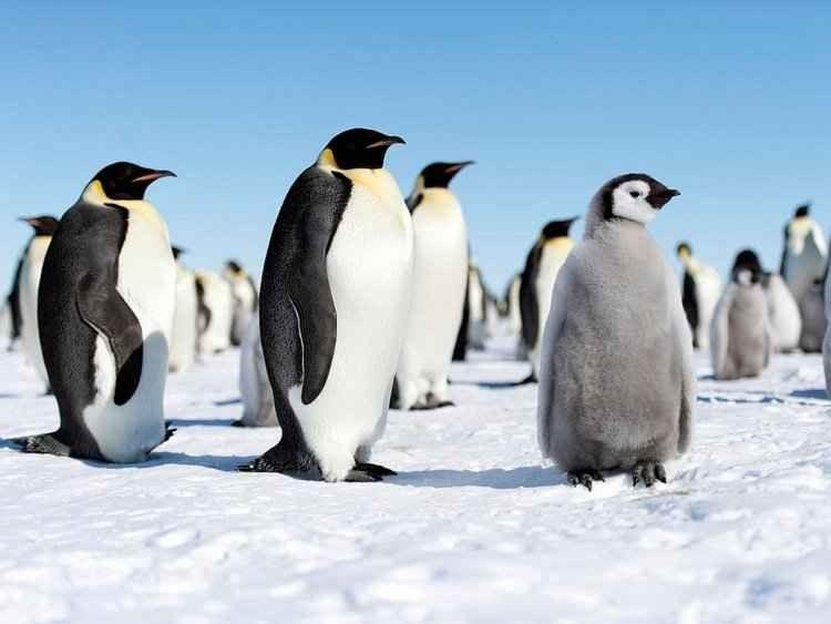 حقائق عن البطريق.. تعرف على طبيعة البطريق وحياته وسرعته وأنواعه