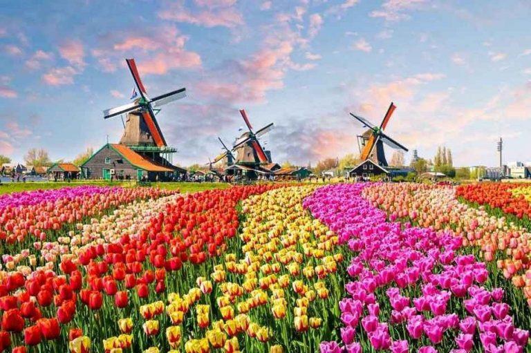 """تكلفة السياحة في هولندا .. """"بلد الورود"""" الأعلى تكلفة بين شيقيقاتها الأوروبيات"""