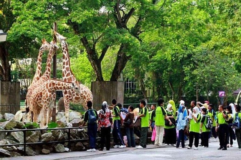حديقة الحيوان في كوالالمبور … تعرف على روعة الطبيعة البرية في كوالالمبور