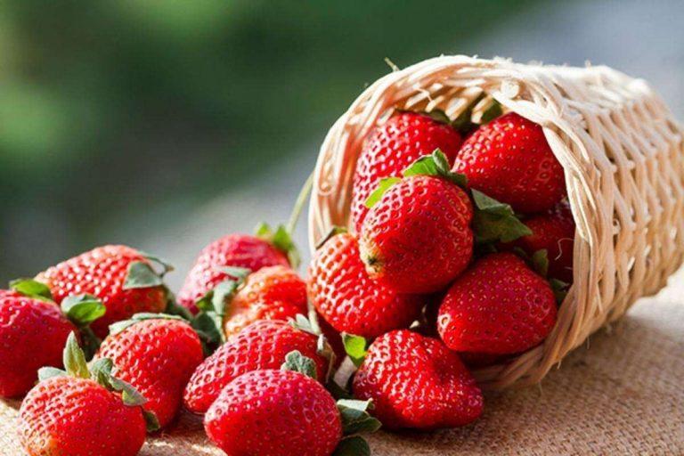 فوائد الفراولة للقولون … تعرف على فوائد الفراولة في مكافحة أمراض الجهاز الهضمي