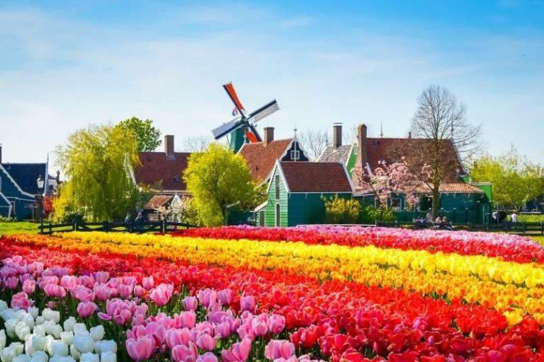 اشهر منتجات هولندا..تعرف علي افضل المنتجات التي يمكنك شراؤها اثناء زيارتك لهولندا
