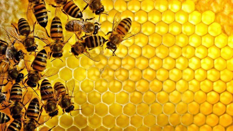 هل تعلم عن العسل … معلومات وحقائق مدهشة حول عسل النحل