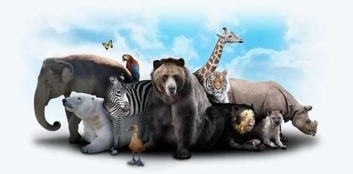 معلومات غريبة عن الحيوانات .. معلومات مثيرة للغاية تعرفها لأول مرة عن عالم الحيوانات