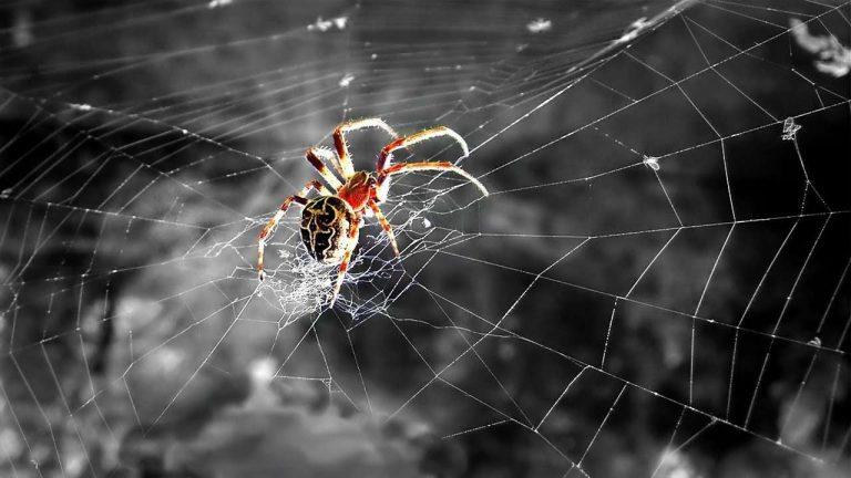 هل تعلم عن العنكبوت… معلومات وحقائق مدهشة عن العناكب