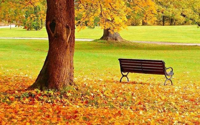 مميزات فصل الخريف – أشياء مميزة تجعل فصل الخريف من أفضل فصول العام