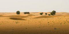 أين تقع الذيد في الإمارات