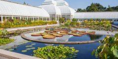 معلومات عن حديقة نيويورك النباتية