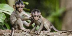حلم القرد في المنام تفسير الامام الصادق