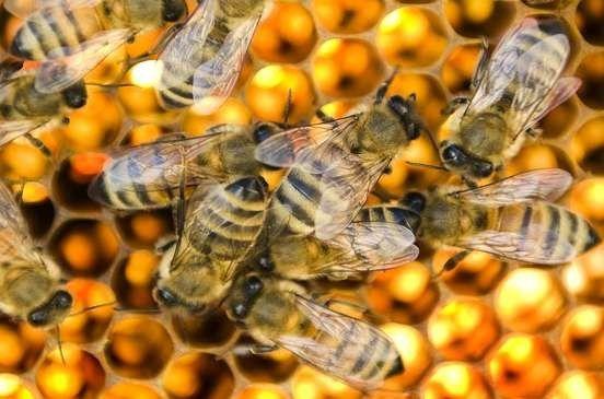 كيفية تدفئة النحل في الشتاء….. تعرف على طرق تدفئة النحل فى فصل الشتاء l  بحر المعرفة