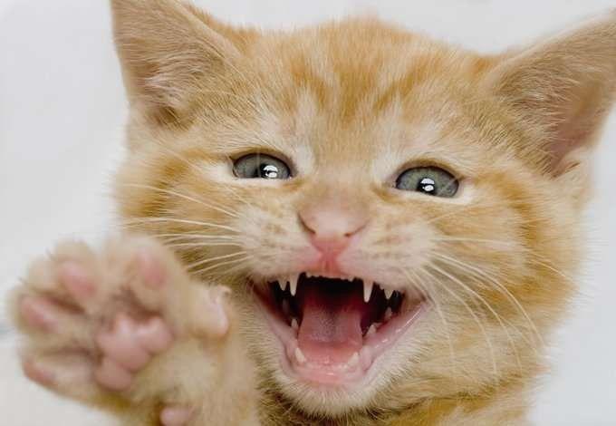 معلومات للاطفال عن القطط…….. تعرف على أهم الحقائق للقطط l  بحر المعرفة