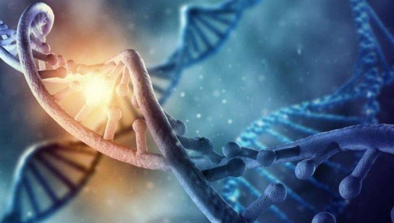 كم عدد الكروموسومات في جسم الإنسان .. معلومات هامة عن الكروموسومات