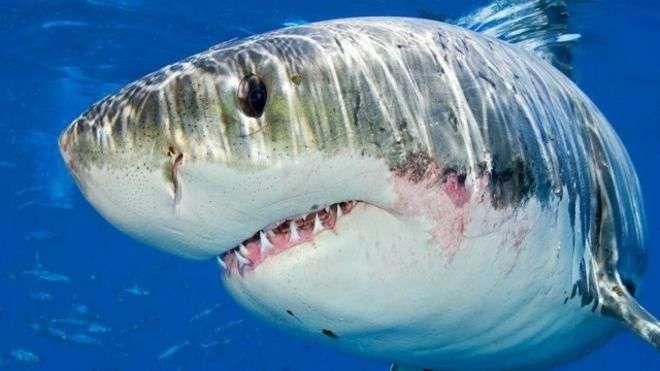 معلومات للاطفال عن سمك القرش