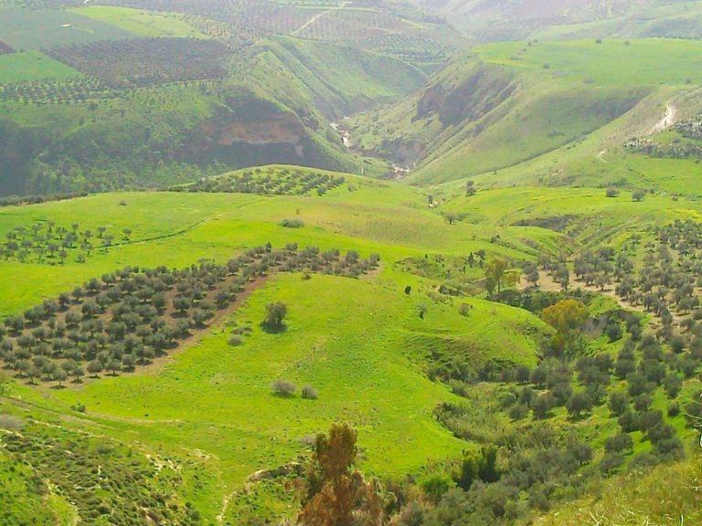 معلومات عن مدينة عجلون – أجمل الأماكن لمشاهدة طبيعة عجلون