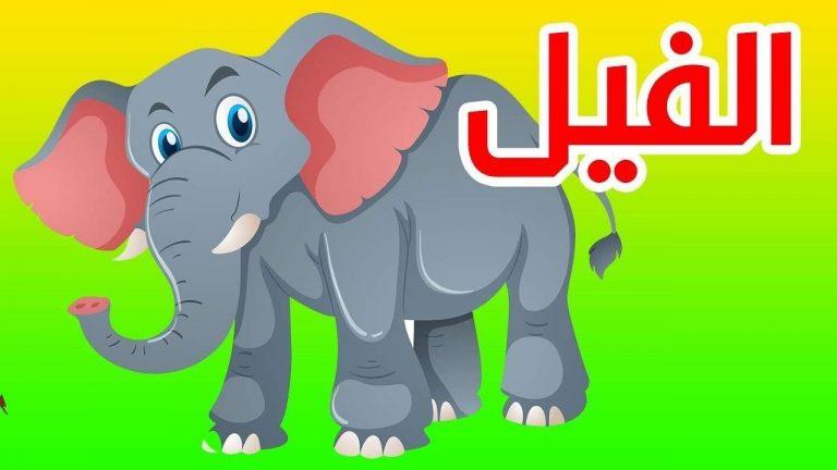 معلومات للاطفال عن الفيل .. معلومات عن الفيل صديق الأطفال ……….