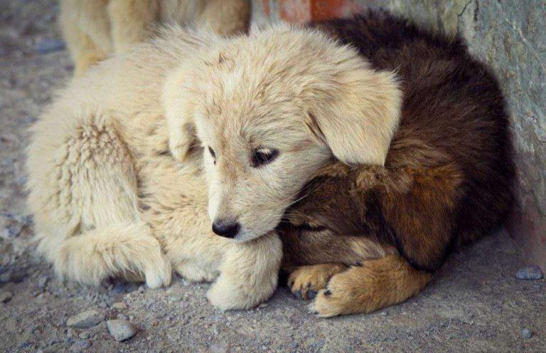 التعامل مع الحيوان و الرفق به