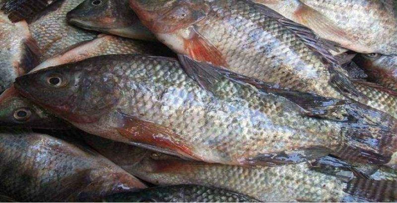 فوائد قشر السمك