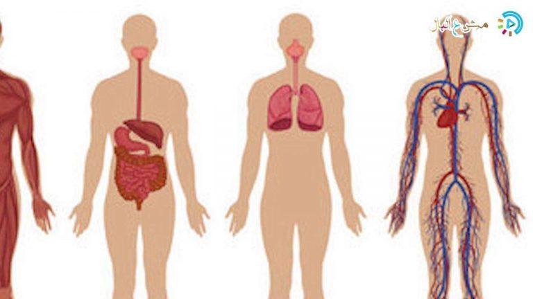 هل تعلم عن الجسم … تعرف على معلومات وحقائق مذهلة عن جسمك