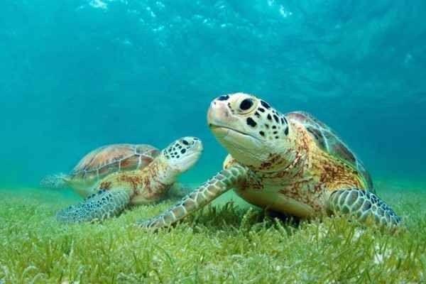 معلومات عن السلاحف.. تعرف على هذا الحيوان المميز انواعه طرق تكاثره وكيف تعتنى به –