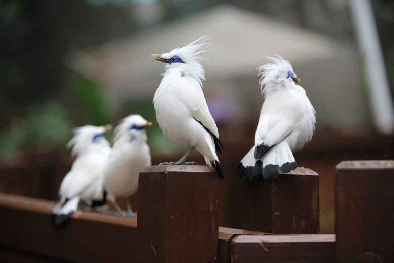 معلومات عن طائر الزرزور.. تعرف على طائر الزرزور وأسلوب حياته ومعيشته –
