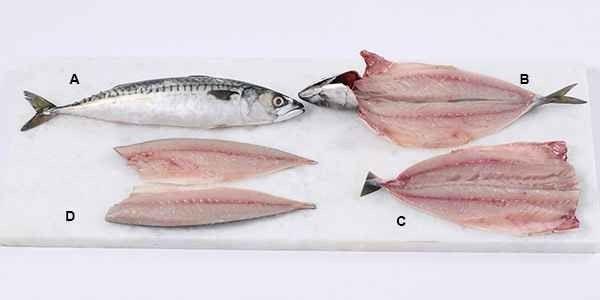 طريقة تنظيف السمك والحصول على قطع فيليه السمك الخالية من العظم