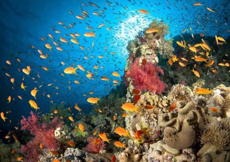معلومات عن البحر الأحمر .. ما سر هذا الاسم وكيف تبدو الحياة البحرية به؟