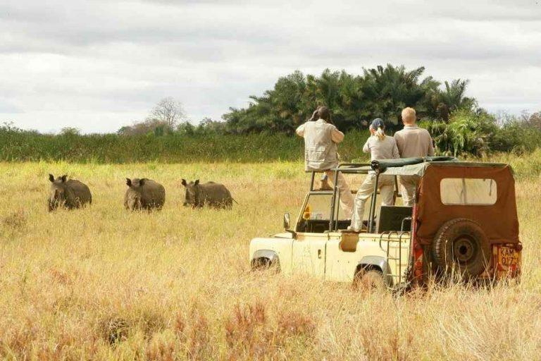 تكلفة السياحة في كينيا .. وجهة عشاق السفاري والمحميات الطبيعية الأولي بالقارة السمراء