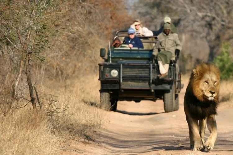 رحلات السفاري في جنوب افريقيا .. تعرّف عليها