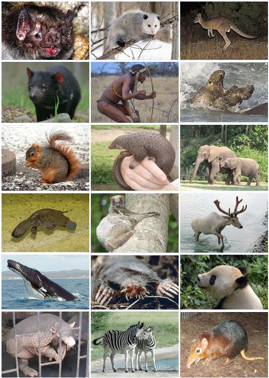 معلومات للاطفال عن الثدييات…خفايا ومعلومات عن الثدييات مهمة للطفل