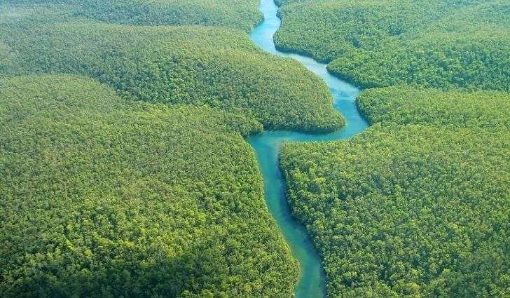 معلومات عن حوض نهر الأمازون